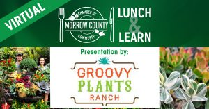 Groovy Plants - Lunch And Learn - March 16 2021 Noon